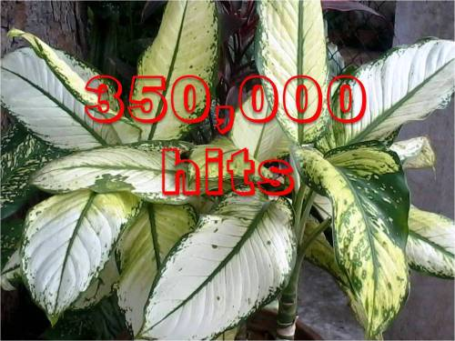 Hits 400000