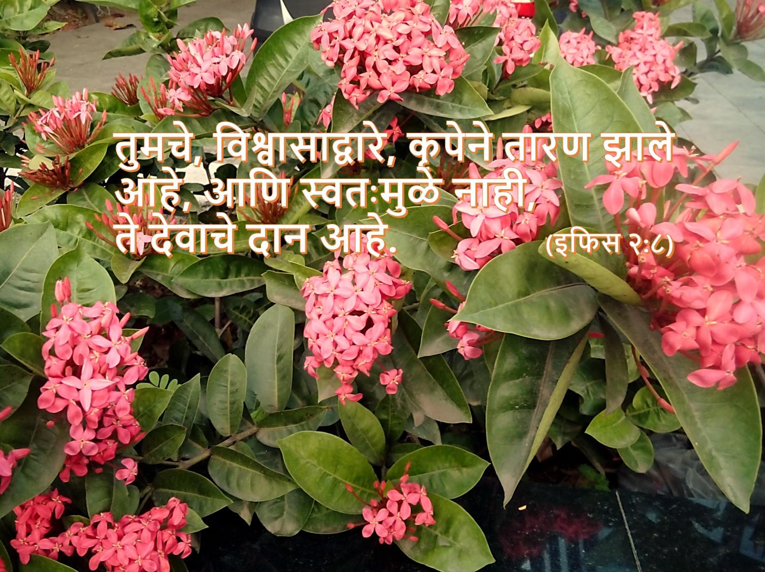 Ephesians nava karar marathi new testament wallpaper eph 2 8 izmirmasajfo